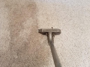 Mr Madison Carpet Cleaning & Upholstery Specialists of Ann Arbor, MI