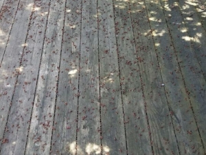 Pressure Washing Back Deck in Troy, MI
